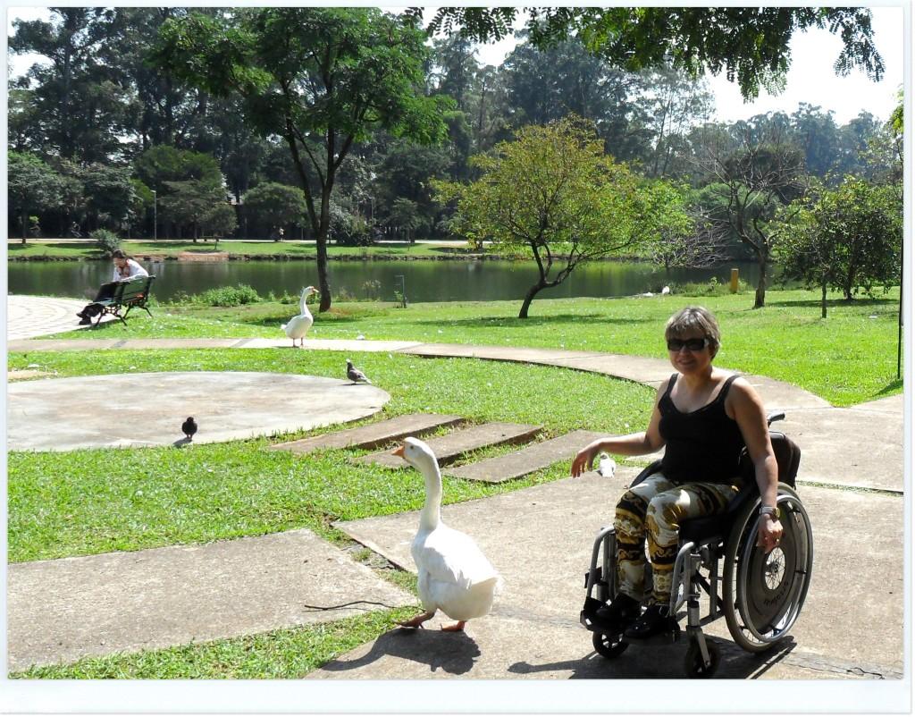 Passeando pelo Parque Ibirapuera, veja quem eu encontro? Um ganso, que não queria mais me deixar...
