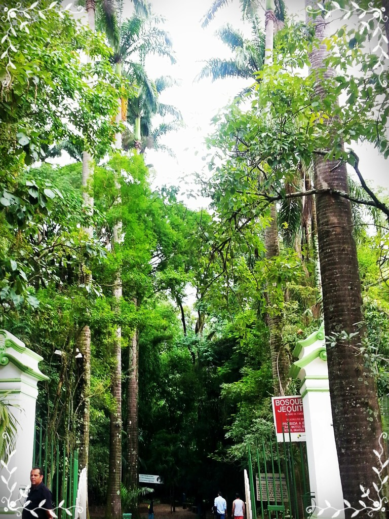 Esta é a entrada do Bosque, com seu corredor de árvores.