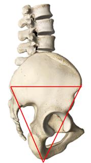 Na figura, você vê a imagem lateral da pelve. Projetado sobre ela, está o desenho de um triângulo invertido.