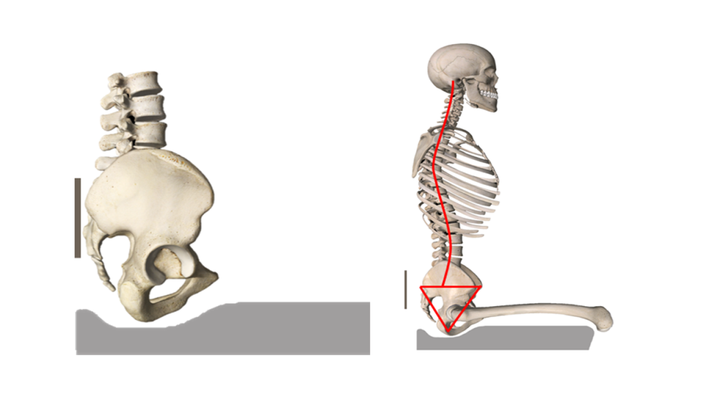 Na figura 2, você vê a pelve posicionada sobre o assento.