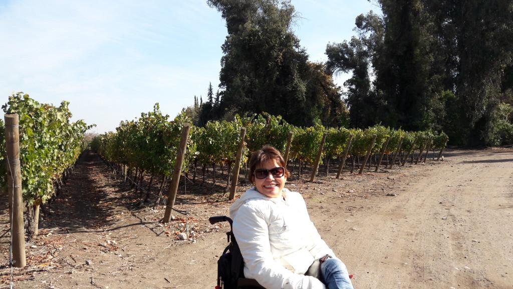 Estou no vinhedo da Concha y Toro. As uvas são cabernet sauvignon - e é possível experimentar!