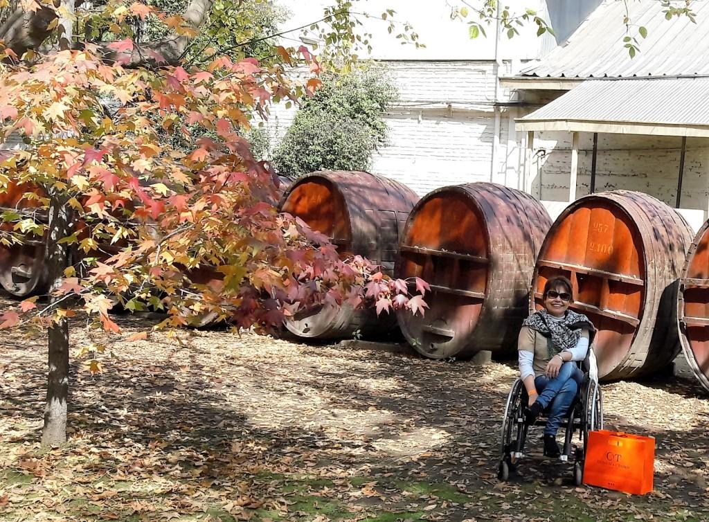Mais uma foto trazendo as lindas cores douradas do outono e os barris de vinho