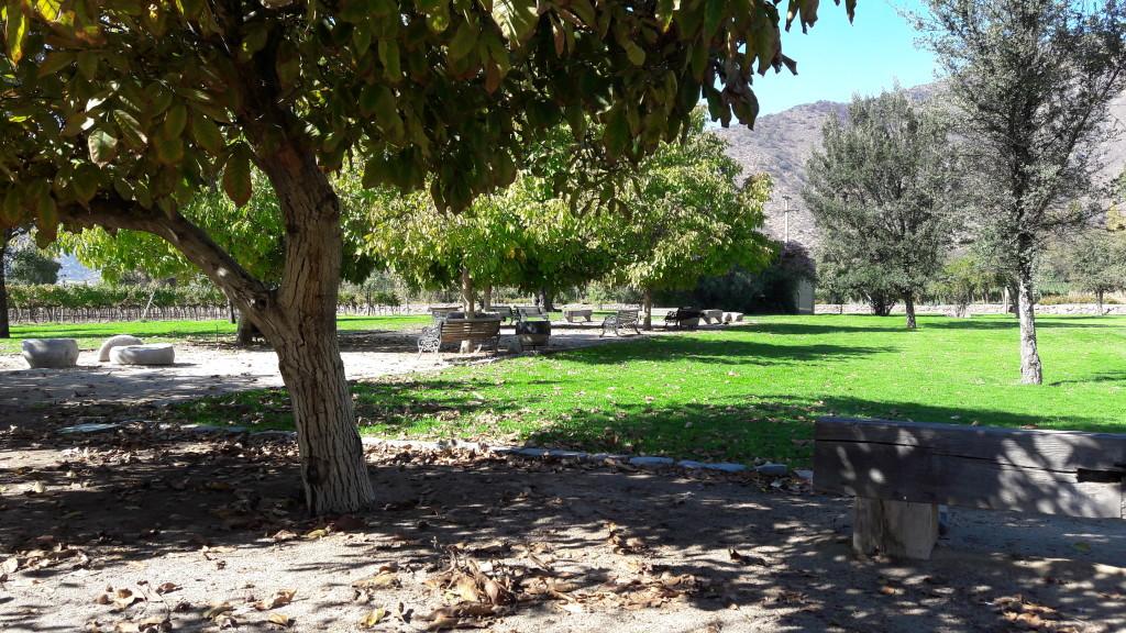 Jardim com nogueiras, na Vinícola Santa Rita